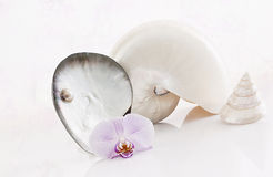 Shells and orchidls Stock Photo