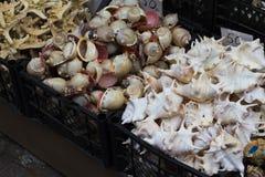 Souvenirs shells on the market royalty free stock photos