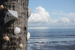 Shells on a Palm trunk Royalty Free Stock Photography