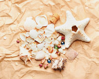 Shells on paper background.vacation concept Royalty Free Stock Photography