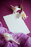 Shells and paper with draperie Stock Photos