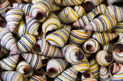 Shells pattern Royalty Free Stock Photos