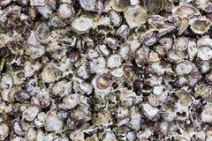 Shells pattern on sea rock Stock Photos