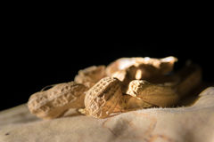 Shells of peanut in close-up view Royalty Free Stock Images