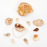 Shells and pearl Stock Images
