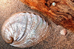 Shells and pearl. Still life about sand with wet shell,wood and pearl Royalty Free Stock Photos