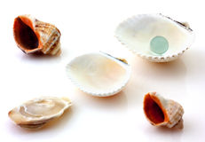 Shells with pearl and Rapana isolated Stock Photo