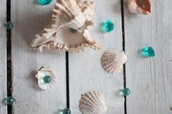 Shells, pearls, sea, background, white background, wooden background, sea shells Stock Photography