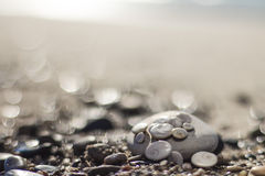 Shells and pebbles on the beach Royalty Free Stock Images