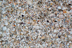 Shells pieces crushed. On the beach royalty free stock photography