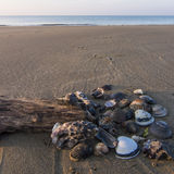 Shells and pieces of wood. With the beach in the background Stock Image
