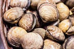 Shells of raw venus clams at the fish shop Stock Images