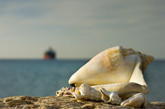 Shells of the Red sea, Eilat, Israel Stock Image