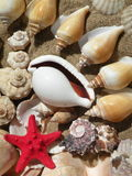 Shells and red star. Various Shells and red Star on the send Royalty Free Stock Photography