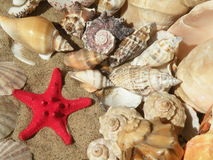 Shells and red star. Beautiful shells and red star on the send Stock Images