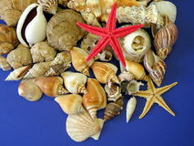 Shells and red star Royalty Free Stock Images
