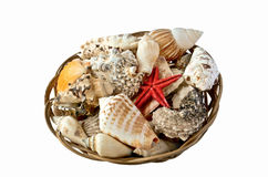 Shells and red starfish in a basket Royalty Free Stock Image