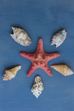 Shells and red starfish lying on blue circle board Royalty Free Stock Images