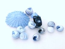 Shells and ring 1. Blue shells and ring on white background Royalty Free Stock Photo