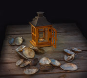 Shells river mussels next to a vintage lamp Stock Photography