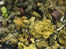 Shells and Rocks Royalty Free Stock Image