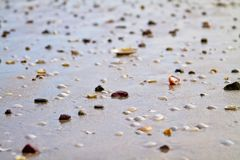 Shells and rocks by the beach royalty free stock photography