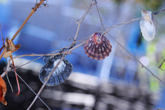 Shells on a Rope. Several various shells tied to a rope on vine branch royalty free stock image