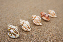 Shells in row Royalty Free Stock Photo