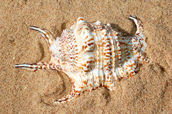 Shells on the sand. Detail shells on the sand Royalty Free Stock Images