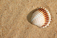 Shells on the sand Royalty Free Stock Photos