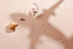 Shells on sand Royalty Free Stock Photo