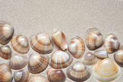 Shells On Sand Royalty Free Stock Image