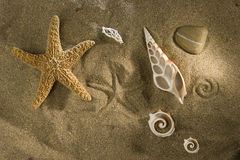 Shells on sand. Close up of starfish and shells on sand royalty free stock photos