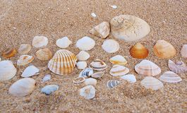 Shells On Sand. Background made from lot of shells lying on sand Royalty Free Stock Image