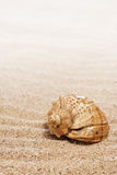 Shells on the sand. As background Stock Photos