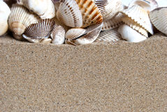 Shells on the sand. Section of shells on the sand Stock Photos