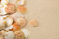 Shells in the sand stock photography