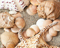 Shells on sand Royalty Free Stock Photos