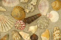 Shells in the sand royalty free stock photos