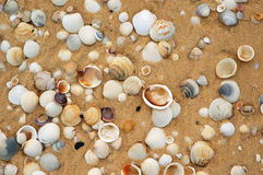 Shells in the sand. Background royalty free stock photos