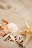 Shells on sand. Shells and starfish on sand Stock Image