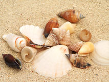 Shells on Sand Stock Image