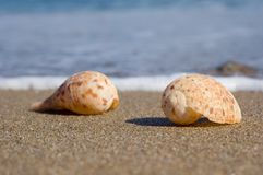 Shells on the sand Stock Images