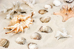 Shells on sand Royalty Free Stock Photography
