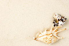 Shells on sand. Sea shells on sand background Stock Photography