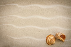 shells with sand as background Stock Images