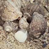 Shells on the sand as a beach background Royalty Free Stock Photo