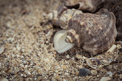 Shells on the sand as a beach background Stock Photo