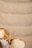 Shells and sand Stock Images