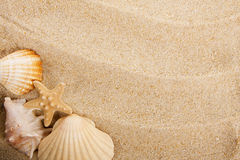 Shells and sand Royalty Free Stock Images